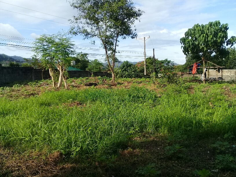 lot-for-sale-in-talamban-proper-cebu-city-3150-sqm